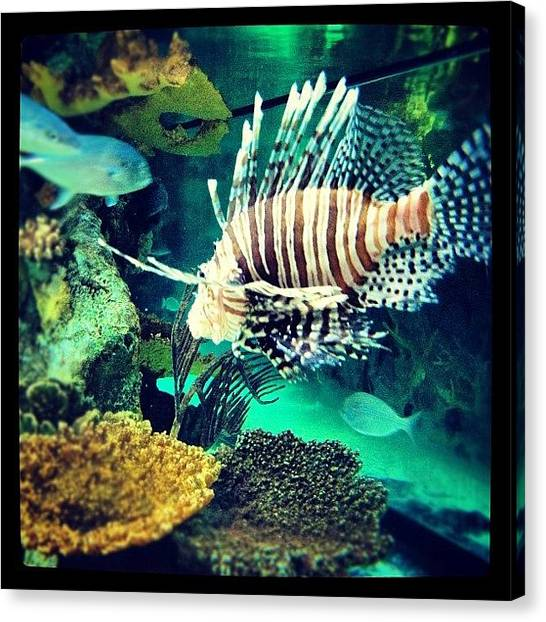 Fish Canvas Print - #fish #swag by Cortney Herron