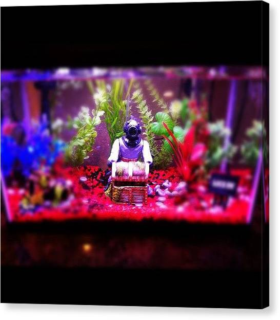 Fish Tanks Canvas Print - #fish #tank #popular #photooftheday #ig by Karina Garay