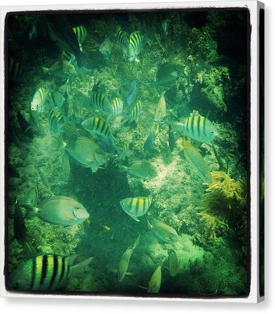 Reef Sharks Canvas Print - #fish #water #ocean #stripped by Bex C