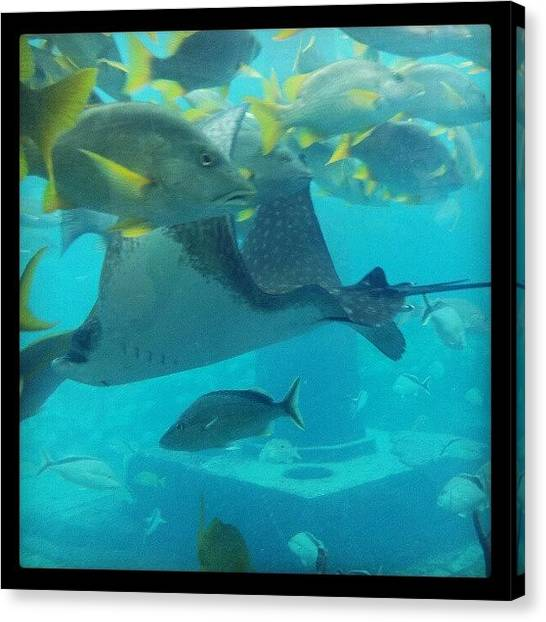 Bahamas Canvas Print - #fishes #stingray #deep #blue #thedig by Norah Elena  Borrero