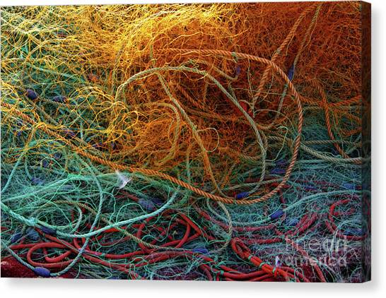 Red Knot Canvas Print - Fishing Nets by Carlos Caetano