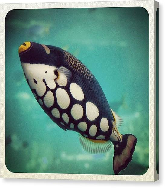 Underwater Canvas Print - Fishy :) by Addie Dordoma