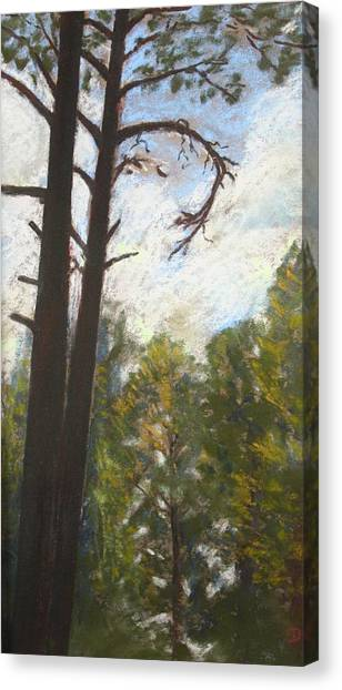 Flagstaff Pines Canvas Print