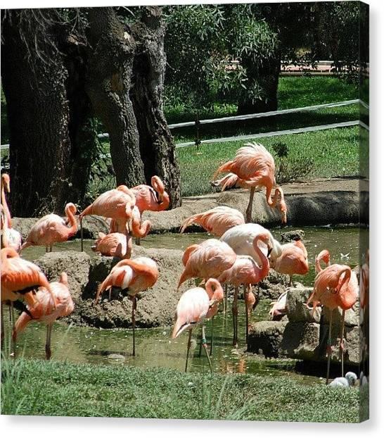 Flamingos Canvas Print - Flamencos by Antutxo Ariza