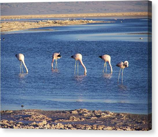 Flamencos At The Atacama Salar Canvas Print