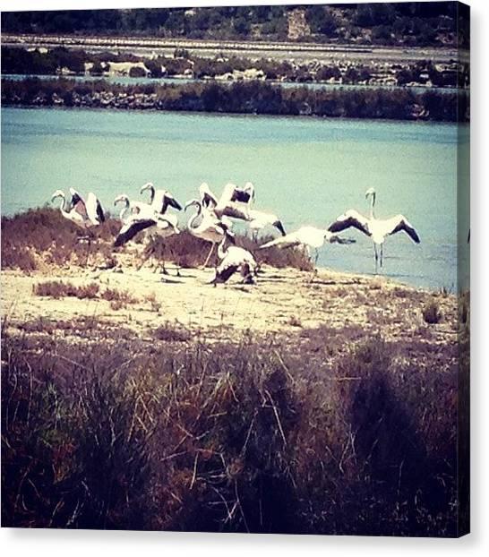 Flamingos Canvas Print - Flamencos En Ses Salines by Juan Jose Rastrollo Torres