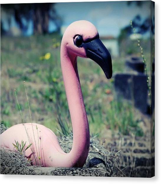 Flamingos Canvas Print - Flamflor / #cemeteryoftheday #cemetery by Sid Graves