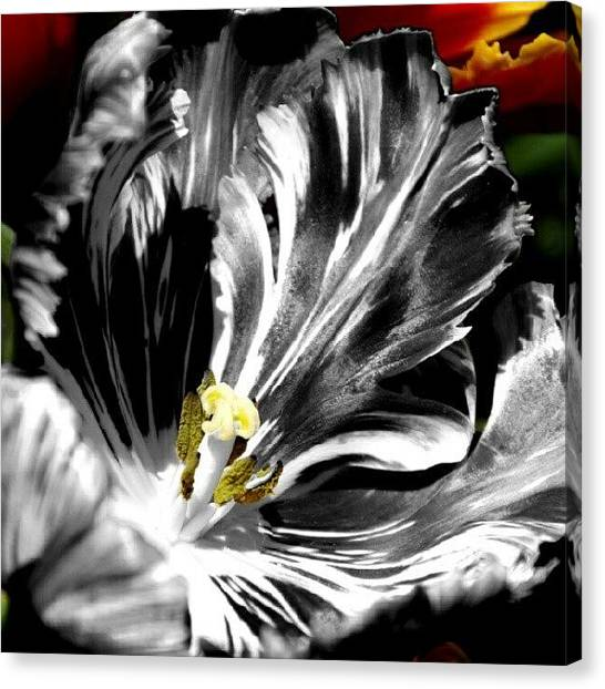 Cool Canvas Print - Flaming Flower 1 by James Granberry