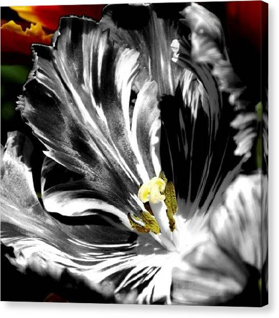 Florals Canvas Print - Flaming Flower 2 by James Granberry