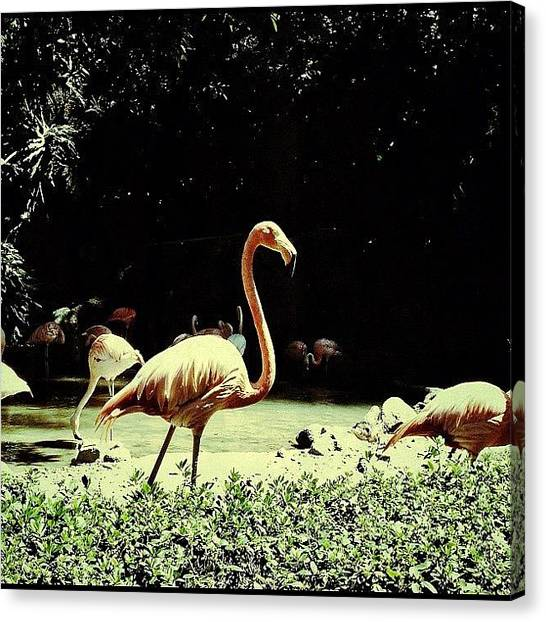 Birds Canvas Print - Flamingo by Cortney Herron