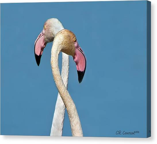 Flamingo Couple Canvas Print