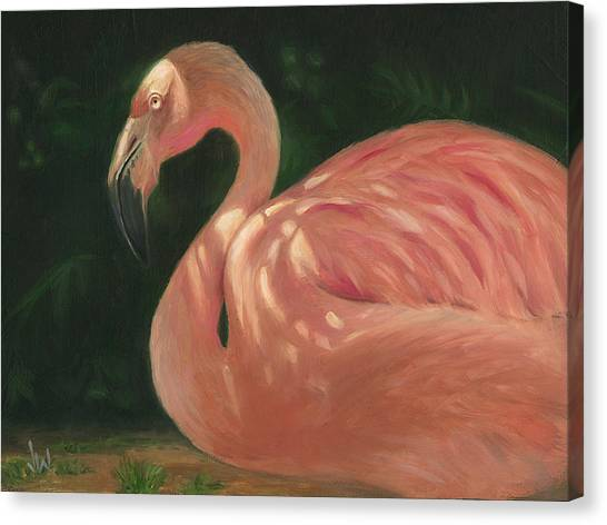 Flamingo In Dappled Light Canvas Print