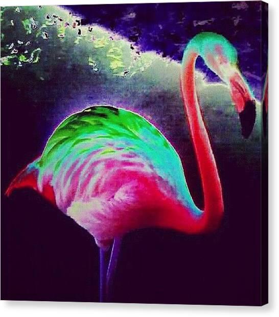 Tropical Birds Canvas Print - Flamingo by Kim Cafri