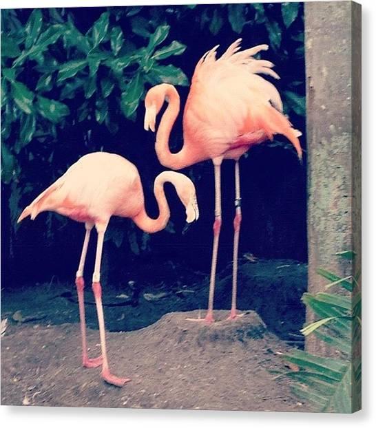 Flamingos Canvas Print - Flamingo Love by Harman Kaur