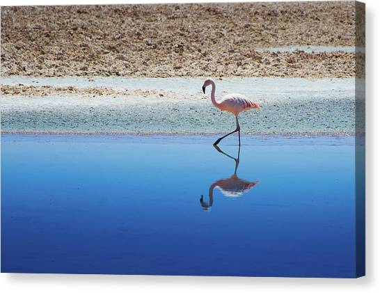 Flamingos Canvas Print - Flamingo by MaCnuel