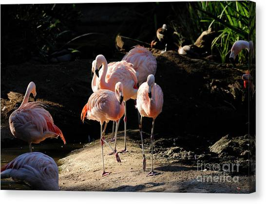 Flamingo Canvas Print by Marc Bittan
