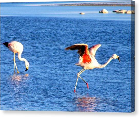 Flamingos Flamencos Canvas Print