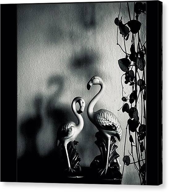 Flamingos Canvas Print - Flamingos. flamingos Often Stand On by Beda MoBe
