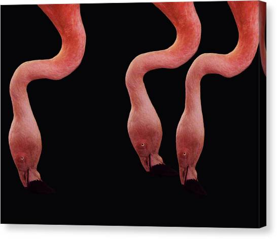 Flamingos Canvas Print by Lourry Legarde