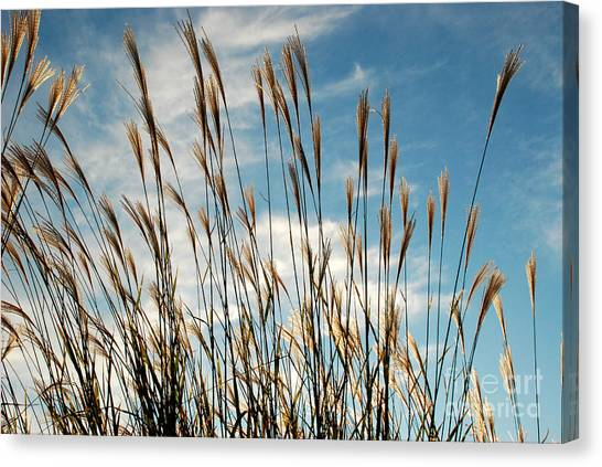 Flare To The Sky Canvas Print