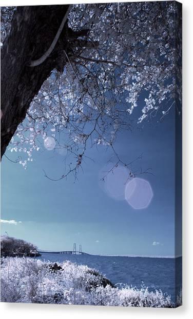 Flaring Sun Canvas Print by Rovi Tavare