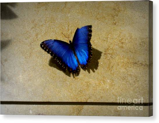 Flawed Beauti-fly Canvas Print by Nicole Tru Photography