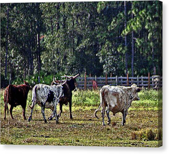 Fleeing Cows Of 441 Canvas Print