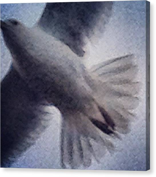 Dove Canvas Print - Flight Of Fancy by Rillaith