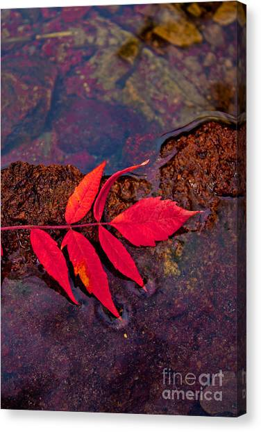 Floating Fall Sumac Canvas Print
