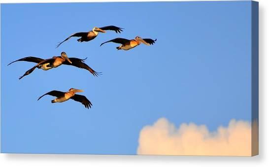 Flocked Canvas Print by Barry R Jones Jr