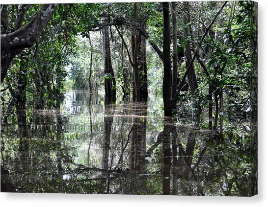 Amazon Rainforest Canvas Print - Flooded Amazon Rainforest by Oliver J Davis Photography