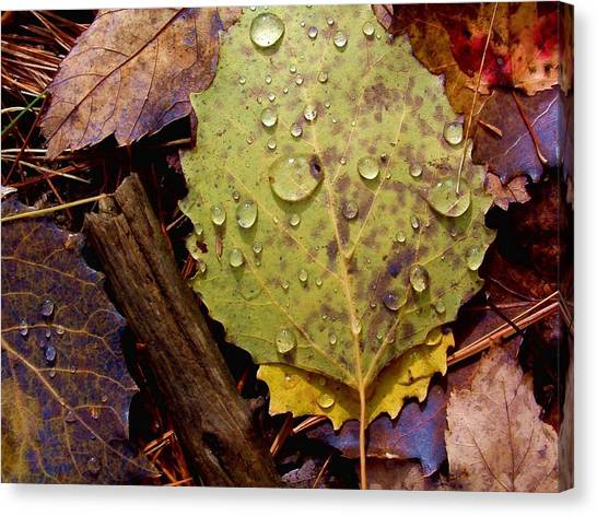 Flora Autumn Leaves On The Forest Floor Canvas Print