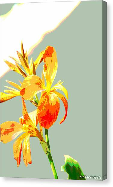 Floral Abstract Canvas Print by Lauren MacIntosh