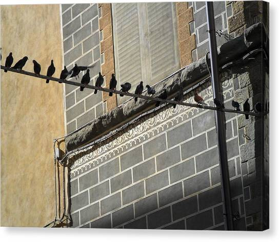 Florentine Pigeons Canvas Print