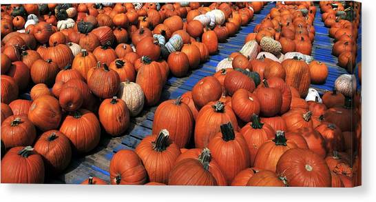 University Of Florida Canvas Print - Florida Gator Pumpkins by David Lee Thompson