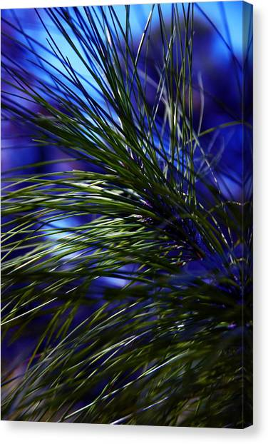 Florida Grass Canvas Print
