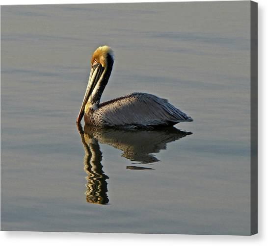 Florida Pelican Canvas Print
