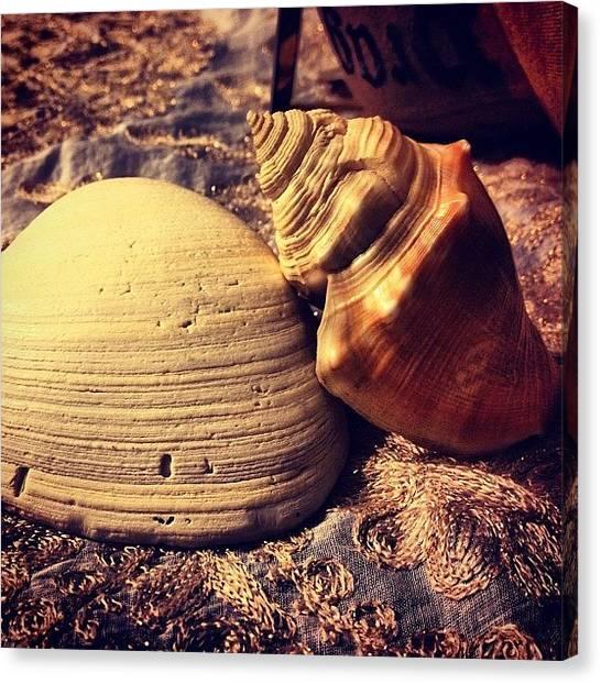 Seashells Canvas Print - Florida Seashells 😍. Thank You by Alaa Almayahi