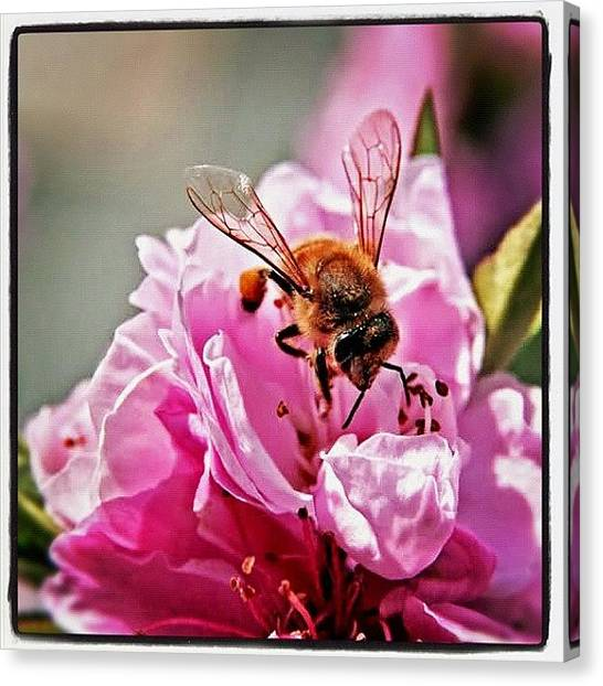 Apes Canvas Print - #flower #ape #summer #love #instaflower by Marco Bustreo