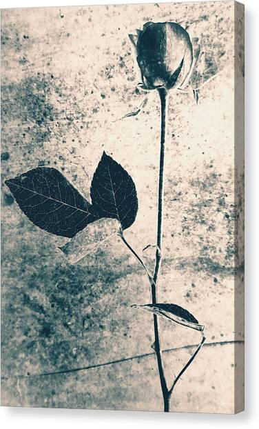 Flower Art Canvas Print by Falko Follert