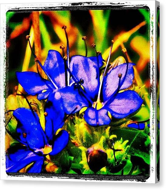 Arkansas Canvas Print - flower Art #nature #austin by Roger Snook