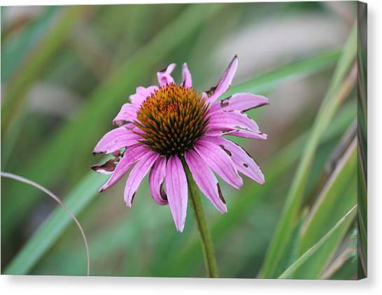 Flower At Waterfall Glen Forest Preserve Canvas Print