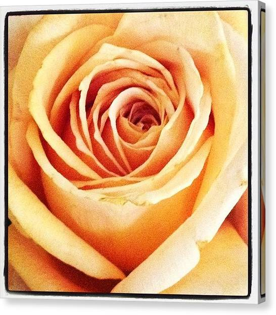 Social Canvas Print - #flower #flowers #flowerlovers #roses by Susan McGurl