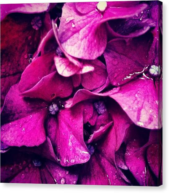 Rain Canvas Print - #flower #flowers #pink #pretty #nature by Katie Williams
