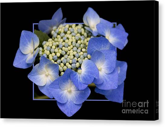 Flower In Frame -11 Canvas Print