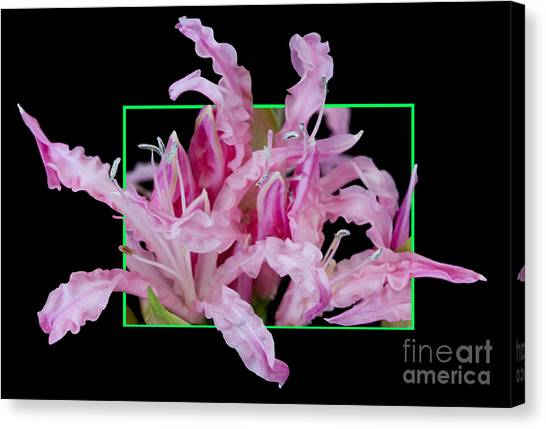 Flower In Frame -13 Canvas Print