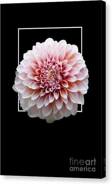 Flower In Frame -4 Canvas Print