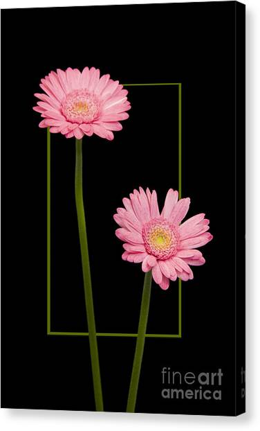 Flower In Frame -7 Canvas Print