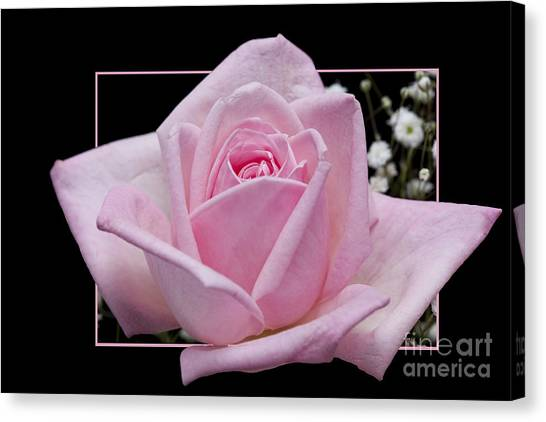 Flower In Frame -9 Canvas Print