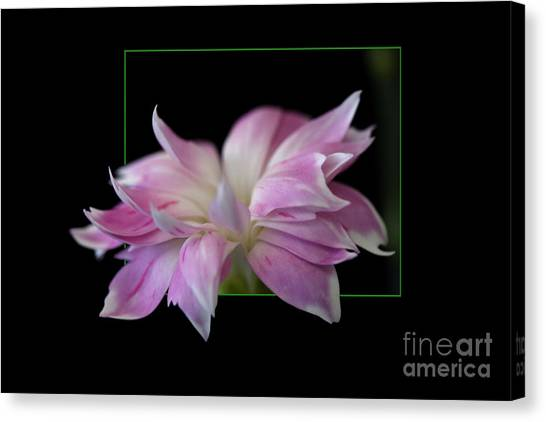 Flower In Frame Canvas Print